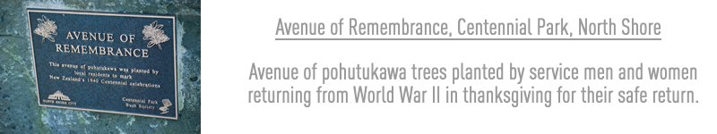 Avenue of Remembrance, Centennial Park, North Shore - Avenue of pohutukawa trees planted by service men and women returning from World War II in thanksgiving for their safe return.